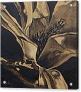 Magnolia Blossom In Sepia Acrylic Print