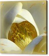 Magnolia Cloud Acrylic Print