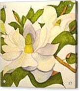 Magnolia Cluster Acrylic Print
