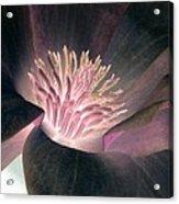 Magnolia Flower - Photopower 1825 Acrylic Print