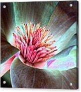 Magnolia Flower - Photopower 1844 Acrylic Print