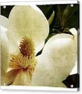 Magnolia I Acrylic Print by Tanya Jacobson-Smith