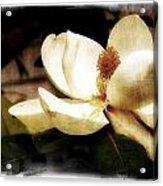 Magnolia IIi Acrylic Print by Tanya Jacobson-Smith