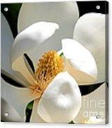 Magnolia Magic Acrylic Print