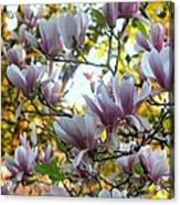 Magnolia Maidens In A Border Acrylic Print