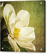 Magnolia Morning Acrylic Print