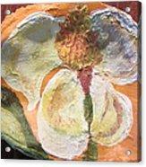Magnolia Orioles Acrylic Print by Debbie Nester
