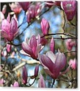Magnolia Perspective Acrylic Print