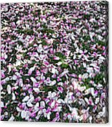 Magnolia Petals Acrylic Print