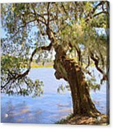Magnolia Plantation And Gardens In Charleston Sc Acrylic Print