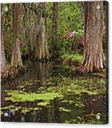 Magnolia Plantation Gardens Spring Series I Acrylic Print