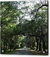 Magnolia Plantation Road Acrylic Print