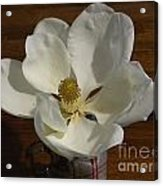 Magnolia Still 1 Acrylic Print