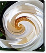 Magnolia Study No 1 Acrylic Print by Chad Miller