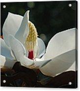Magnolia Tiny Gem Acrylic Print