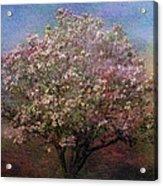 Magnolia Tree In Bloom Acrylic Print