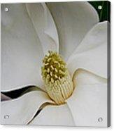 Magnolia Two Acrylic Print