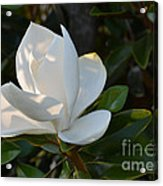 Magnolia With Best Bud Acrylic Print