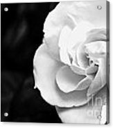 Magnolia With Leaves Acrylic Print