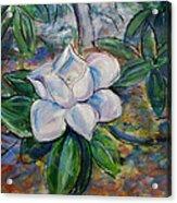 Magnolia's Flower Acrylic Print