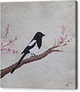 Magpie On Cherryblossm Tree Acrylic Print