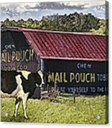 Mail Pouch Barn With Cow Acrylic Print