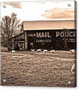 Mail Pouch Tobacco Barn And Sheep Acrylic Print
