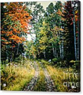 Maine Back Road Acrylic Print