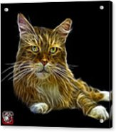 Maine Coon Cat - 3926 - Bb Acrylic Print