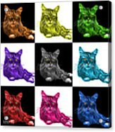 Maine Coon Cat - 3926 - V1 - M Acrylic Print