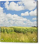 Maine Corn Field In Summer Photo Print Acrylic Print