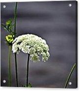 Maine Flora Acrylic Print