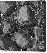 Maine Stones Acrylic Print