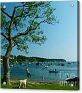 Maine Summer Day At Mackerel Cove   Acrylic Print