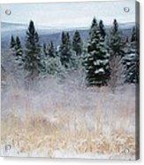 Maine Woods Acrylic Print