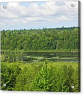 Mainely Green Acrylic Print