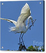 Maintaining The Nest Acrylic Print