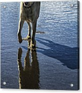 Maisie At The Beach Acrylic Print