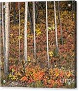 Majestic Autumn In The Grand Tetons Acrylic Print