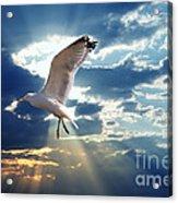 Majestic Bird Against Sunset Sky Acrylic Print