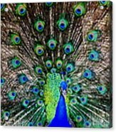 Majestic Blue Acrylic Print
