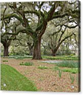 Majestic Live Oaks In Spring Acrylic Print