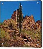 Majestic Saguaro Acrylic Print