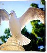Majestic Seagull II Acrylic Print