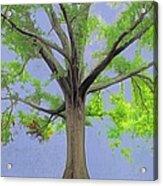 Majestic Tree With Birds Nest Acrylic Print