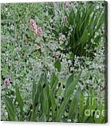 Majestica  Acrylic Print by Tim Rice