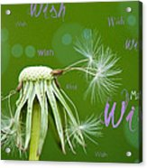 Make A Wish Card Acrylic Print by Lisa Knechtel