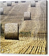 Make Hay While The Sun Shines  Acrylic Print