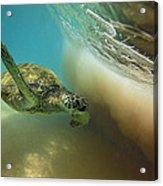 Makena Surfer Acrylic Print