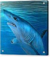 Mako Shark Acrylic Print